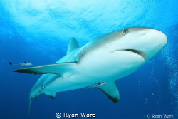 When Sharks Smile by Ryan Ware