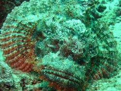 Scorpionfish taken with a macro lens. by Andy Kutsch