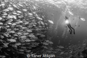 Into the jack ball by Taner Atilgan