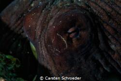 Octopus eye  by Carsten Schroeder