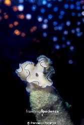 Stardust on nudi. by Francesco Pacienza