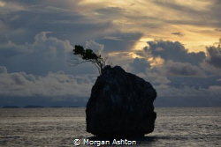 A Tree Grows in West Papua by Morgan Ashton