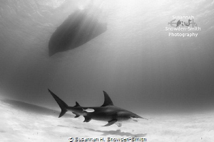 """Beauty Under The Boat""