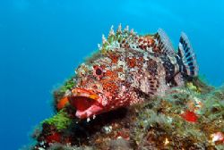 Past weekend I dived first time with my D200, and the res... by Arthur Telle Thiemann