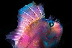 Cotton Candy 🍭 Leaf Scorpionfish - backlit then painted... by Michelle Blais