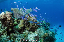 School on the Coral by Emily Melvin