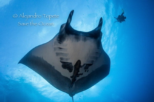 Mantarray and diver, Cabo Piers México by Alejandro Topete