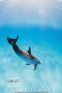 """""""Dolphin Bliss!"""" One of the greatest experiences of my l... by Susannah H. Snowden-Smith"""