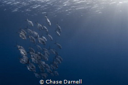 """Permit Pack""
