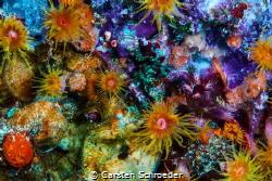 colour by Carsten Schroeder