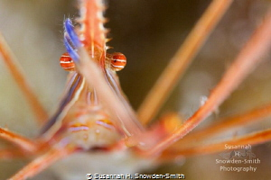 """Hamlet""