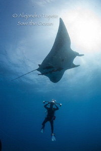 Photographer Mantaray and sun, Roca Partida Mexico by Alejandro Topete