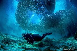 Amazing schools of fish at Arborek Village, Raja Ampat. by Norm Vexler