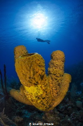Yellow Sponge Tubes by Eduardo Arribada