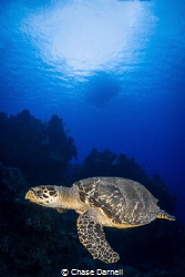 """Turtle Time""