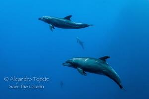 Dolphins come, Roca Partida México by Alejandro Topete