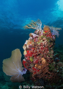Unusual coral stand providing a variety of textures & col... by Billy Watson