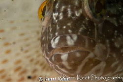 Klipvis all up in my face by Kerri Keet