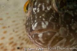 Klipvis all up in my face by Kerri Keet