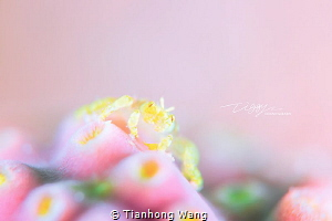 CUPCAKE @Romblon by Tianhong Wang