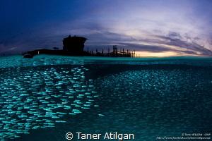 Watercolor Sunset by Taner Atilgan