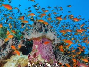 Fishes, fishes by Sigitas Sirvydas