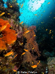 marine life by Pieter Firlefyn
