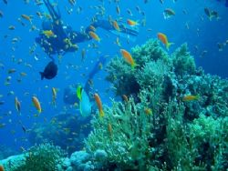 The abundance of life at the coral reef in Sharm el Sheik... by Vanja Crljenica