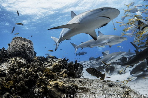 This image is the  arrival of sharks as we hit the bottom... by Steven Anderson