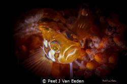 Eye shadows to die for by Peet J Van Eeden