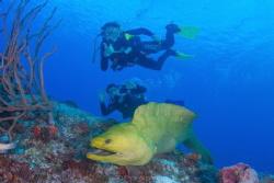 Moray leading a dive. by Pepe Suarez