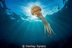 Jellyfish Bothering by Henley Spiers