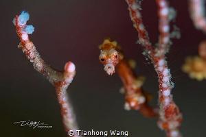 CURIOUS by Tianhong Wang