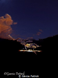 Crab flying by Garcia Patrick