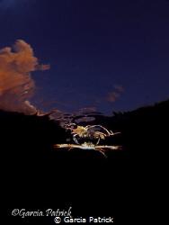Crab flying by Garcia Patrick