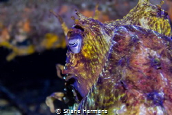 Eye of the Beholder. a Close up shot of an Adult sized Se... by Shane Hermans
