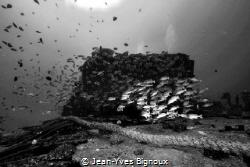 the Jebedah Shipwreck/Trou aux Biches.Mauritius,Republic ... by Jean-Yves Bignoux