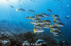 Taken at Mioskon, Raja Ampat. There we abundant fish, thi... by Ari Karyadi