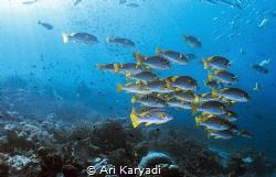 Taken at Mioskon, Raja Ampat. There we abundant fish, thi... by Ari Karyadi