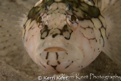 A common Cape Town fish found often in rock pools and sha... by Kerri Keet