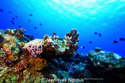 Reef ecosystem Grand Bay Mauritius 18 m by Jean-Yves Bignoux