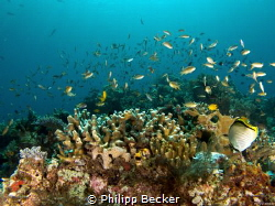 Reef scape shooted at Yembraimuk (Raja Ampat) with G16 by Philipp Becker