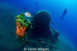 Wreck from Kabatepe/Turkey - no crop by Taner Atilgan