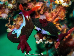 Season for Love~