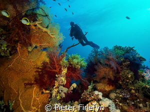 Diver with marine life by Pieter Firlefyn