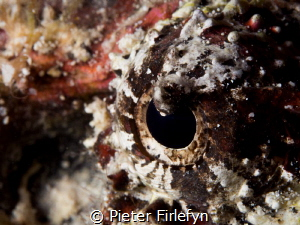 eye of the stonefish by Pieter Firlefyn