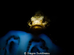 Devil Scorpionfish hiding in the dark. by Dragos Dumitrescu