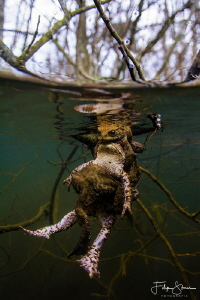 """""""WE NEED CPR!"""" Toads are amphibians. This means they regu... by Filip Staes"""