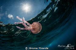 Pélagia by Jérome Mirande