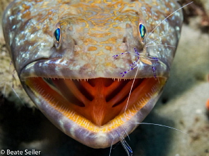 Cleaning time , lizard fish with cleaner shrimp by Beate Seiler
